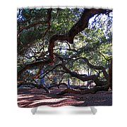 Angel Oak Side View Shower Curtain