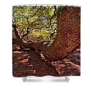 Angel Oak Tree 003 Shower Curtain