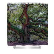 Angel Oak Tree Deeply Rooted History Shower Curtain