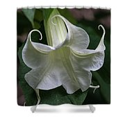 Angel Trumpet Shower Curtain
