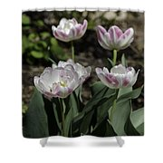 Angelique Peony Tulips Squared Shower Curtain