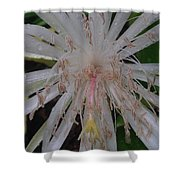 Angels Tears Shower Curtain