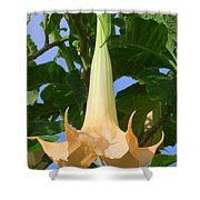Angels Trumpet Shower Curtain