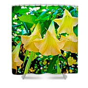 Angel's Trumpets At Pilgrim Place In Claremont-california Shower Curtain