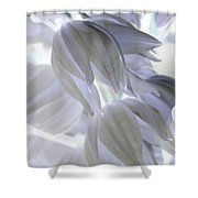 Angels Wings Shower Curtain