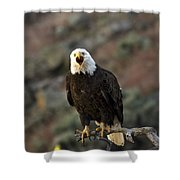 Angry Bald Eagle Shower Curtain