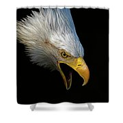 Angry Bald Eagle Portrait Shower Curtain