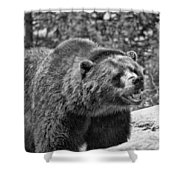 Angry Bear Black And White Shower Curtain