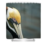 Angry Pelican Shower Curtain