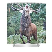 Angry Stag Shower Curtain