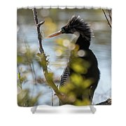 Anhinga 3 March 2018 Shower Curtain by D K Wall