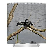 Anhinga And Alligator Shower Curtain
