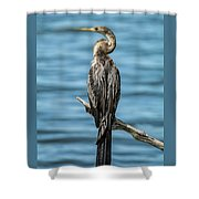 Anhinga  Shower Curtain