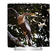 Anhinga Water Fowl Shower Curtain