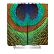 Animal - Bird - Peacock Feather Shower Curtain