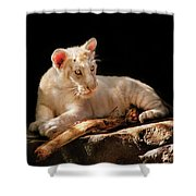 Animal - Cat - A Baby Snow Tiger Shower Curtain