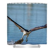 Animal - Bird - Osprey Catching A Fish Shower Curtain