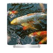 Animal - Fish - Bestow Good Fortune Shower Curtain