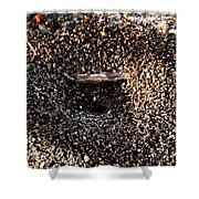 Animal Homes Ants Maybe Shower Curtain