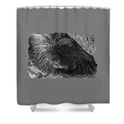 Animal T-shirt - B Shower Curtain
