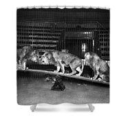 Animal Tamer Shower Curtain