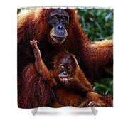 Animals 2 Shower Curtain