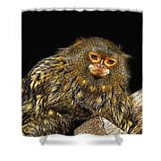 Animals 56 Shower Curtain