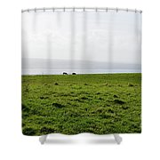 Animals Grazing In A Field Along The Cliffs Of Moher Shower Curtain