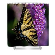Anise Swallowtail Shower Curtain