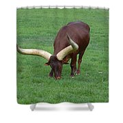 Ankole Cattle Eating Shower Curtain