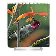 Anna's Hummingbird 1 Shower Curtain