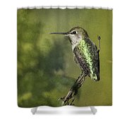 Anna's Hummingbird 3 Shower Curtain