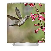 Anna's Hummingbird And The Penstemon  Shower Curtain