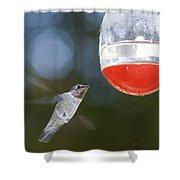 Annas Hummingbird Calypte Anna Shower Curtain