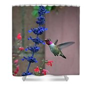 Anna's Hummingbird Feasting At Blue Salvia Shower Curtain