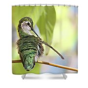 Anna's Hummingbird - Preening Shower Curtain