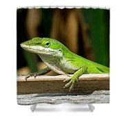 Anole 16 Shower Curtain