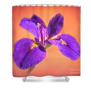 Another Iris Shower Curtain