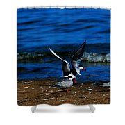 Another One Take A Tern Shower Curtain