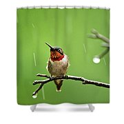 Another Rainy Day Hummingbird Shower Curtain