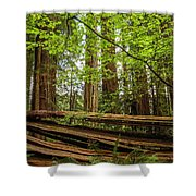 Another Split Redwood Shower Curtain