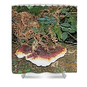 Another Toadstool Shower Curtain