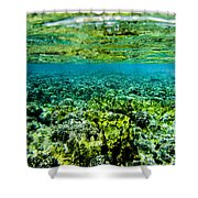 Ant Atoll Reef Shower Curtain