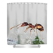 Ant Macro Photography Shower Curtain