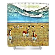 Antelope At Attention Shower Curtain
