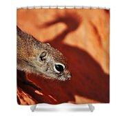Antelope Ground Squirrel II Shower Curtain