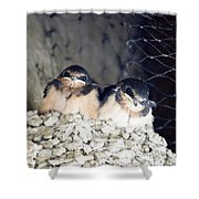 Antelope Island Birds Shower Curtain