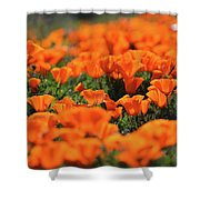 Antelope Valley California Poppies Shower Curtain