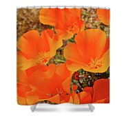 Antelope Valley Poppy Portrait Shower Curtain