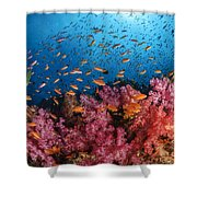Anthias Fish And Soft Corals, Fiji Shower Curtain